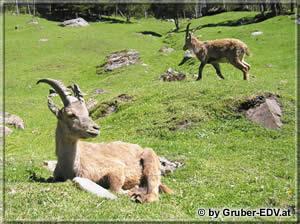 Foto Tierpark Ferleiten